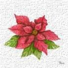 Poinsettia I art print poster transferred to canvas