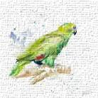 Amazon Parrot III art print poster transferred to canvas