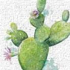 Cactus in Bloom art print poster transferred to canvas