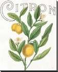 Classic Citrus V art print poster with block mounting