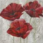 THREE POPPIES II art print poster transferred to canvas
