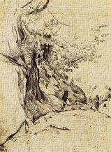 Sepia Tree Study art print poster transferred to canvas