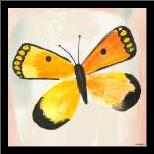 Butterfly IV art print poster with simple frame