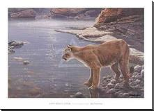 Canyon Creek- Cougar (Detail) art print poster with block mounting
