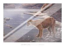 Canyon Creek- Cougar (Detail) art print poster with laminate