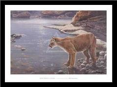Canyon Creek- Cougar (Detail) art print poster with simple frame