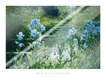 Blue Poppies art print poster with laminate