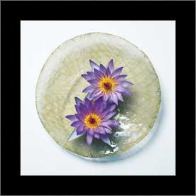 Leaf and Water Lily Flower art print poster with simple frame