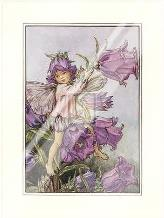 Canterbury Bell Fairy art print poster with laminate