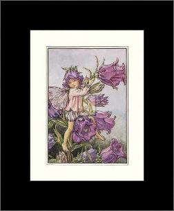 Canterbury Bell Fairy art print poster with simple frame