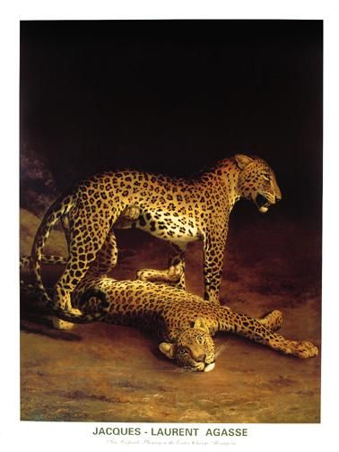 Two Leopards Playing In The Exeter Chang poster print by Jacques-Lauren Agasse