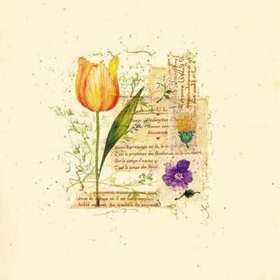 Flower Notes With Orange Tulip poster print by Audra Chaitram