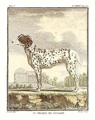 Classical Dogs {H} poster print by Georges-Louis Buffon