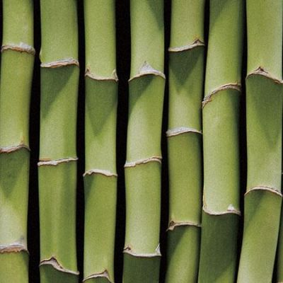 Bamboo Lengths poster print by Boyce Watt