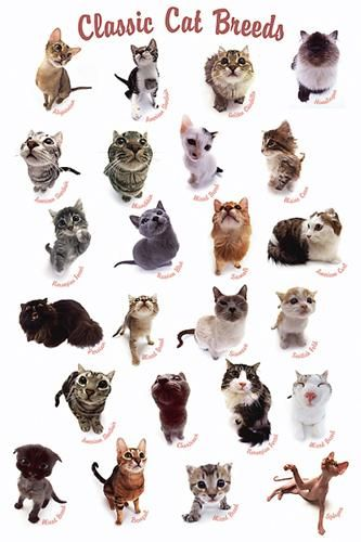 Lots Of Cats Every Breed