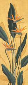 Bird Of Paradise poster print by Paul Brent