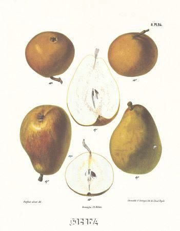 Pears poster print by Anonymous Fruit