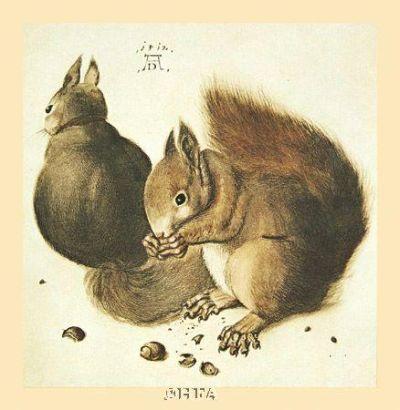 Squirrels poster print by AlbrechtDurer