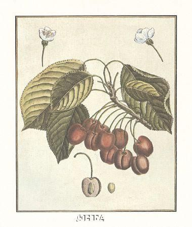 French Fruit Platecherries poster print by Anonymous Fruit