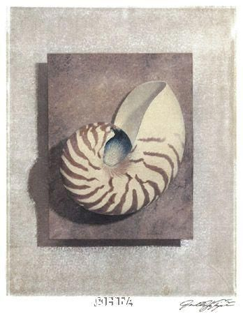 Seashell Study II poster print by Julie Nightingale