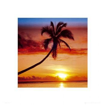 Sunset - Palm Tree poster print by  Unknown