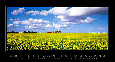 Fields of Rape Flowers, Northumberland poster print by Ken Duncan