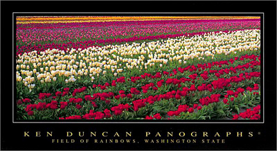 Field of Rainbows, Washington State poster print by Ken Duncan