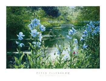 Blue Poppies poster print by  Ellenshaw