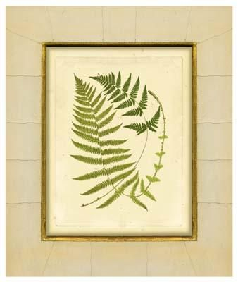 Fern With Crackle Mat (H) III poster print by Samuel Curtis