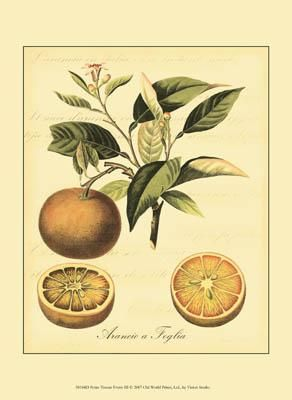 Petite Tuscan Fruits III poster print by Vision Studio