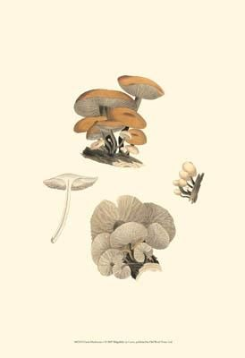 Curtis Mushrooms I poster print by  Curtis