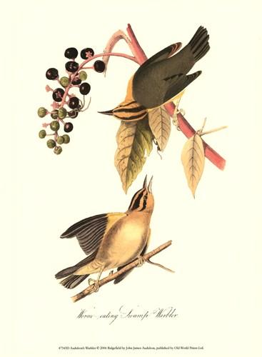 Audubon's Warbler poster print by John JamesAudubon