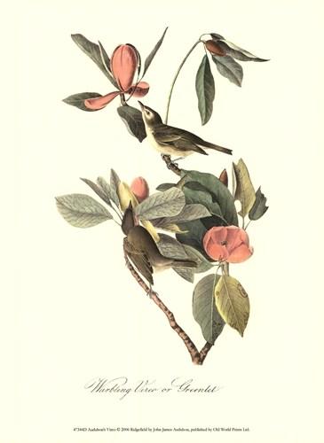 Audubon's Vireo poster print by John JamesAudubon