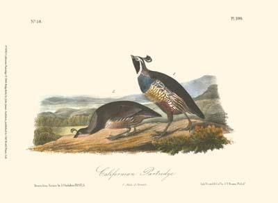California Partridge poster print by John James Audubon
