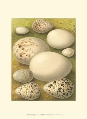 Bird Egg Collection III poster print by  Vision Studio