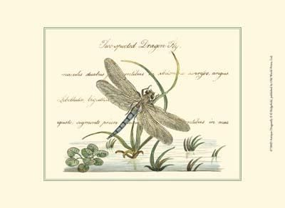 Antique Dragonfly II poster print by  Vision Studio