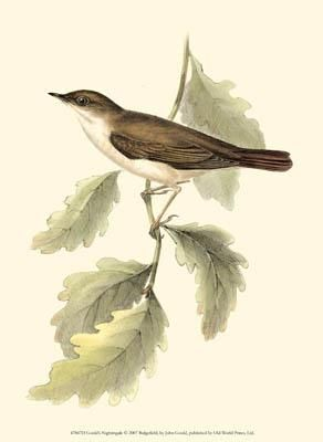Gould's Nightingale poster print by John Gould