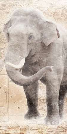 African Traveling  Animals Elephant poster print by Jace Grey