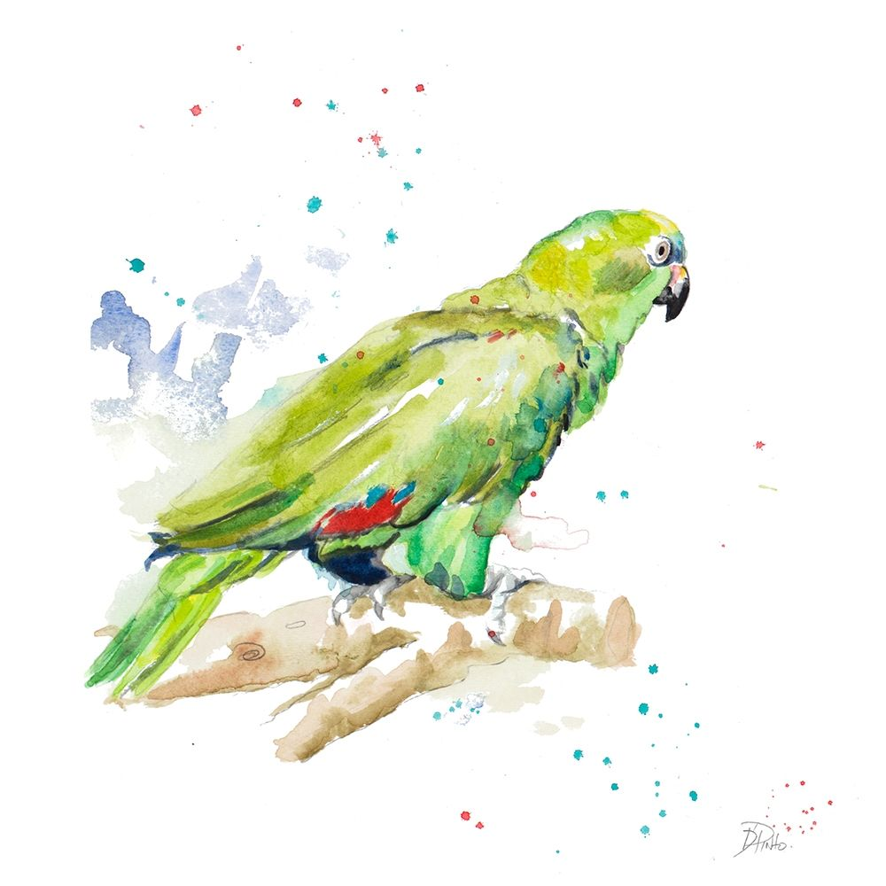Amazon Parrot III poster print by Patricia Pinto