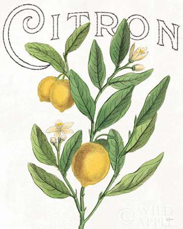 Classic Citrus V poster print by Sue Schlabach