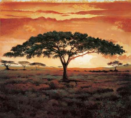 Masai Tree poster print by  Madou