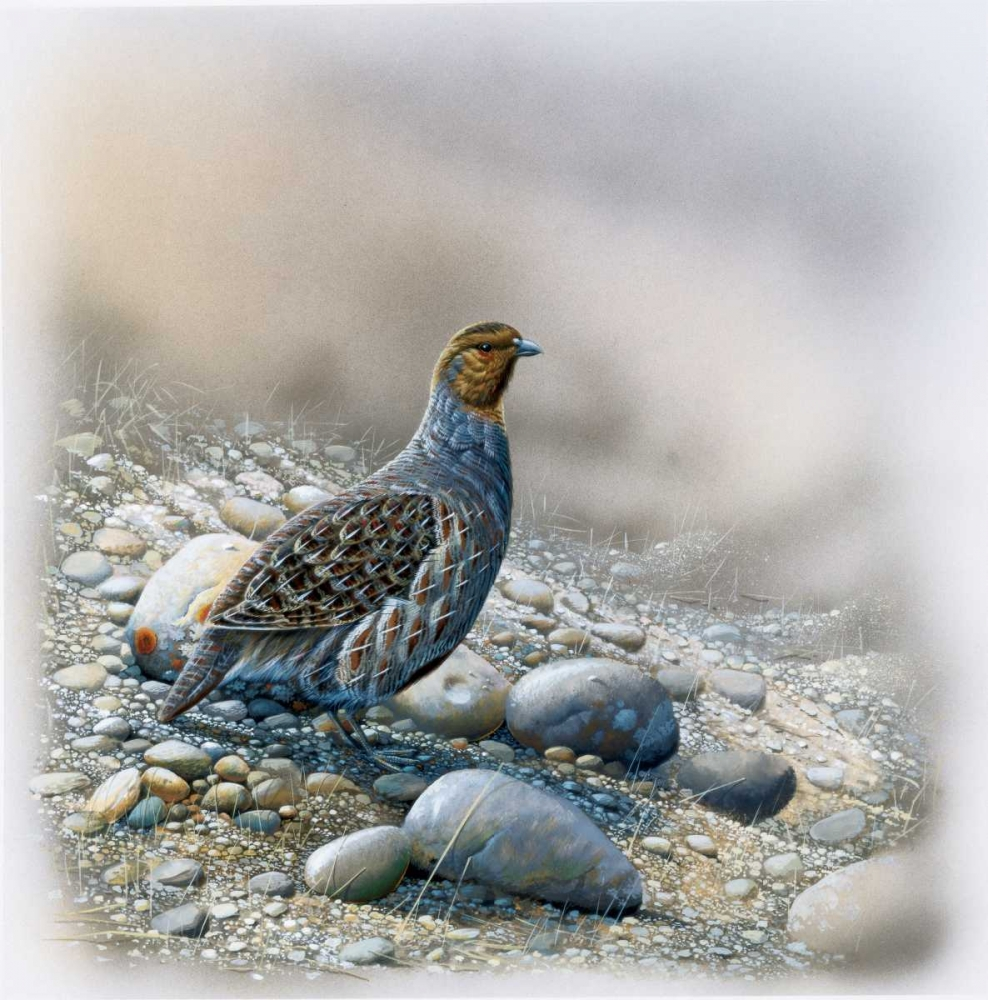 Bird between stones poster print by Jan Weenink