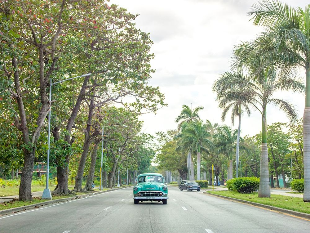Vintage car on a road with palm trees, Cuba poster print by Assaf Frank