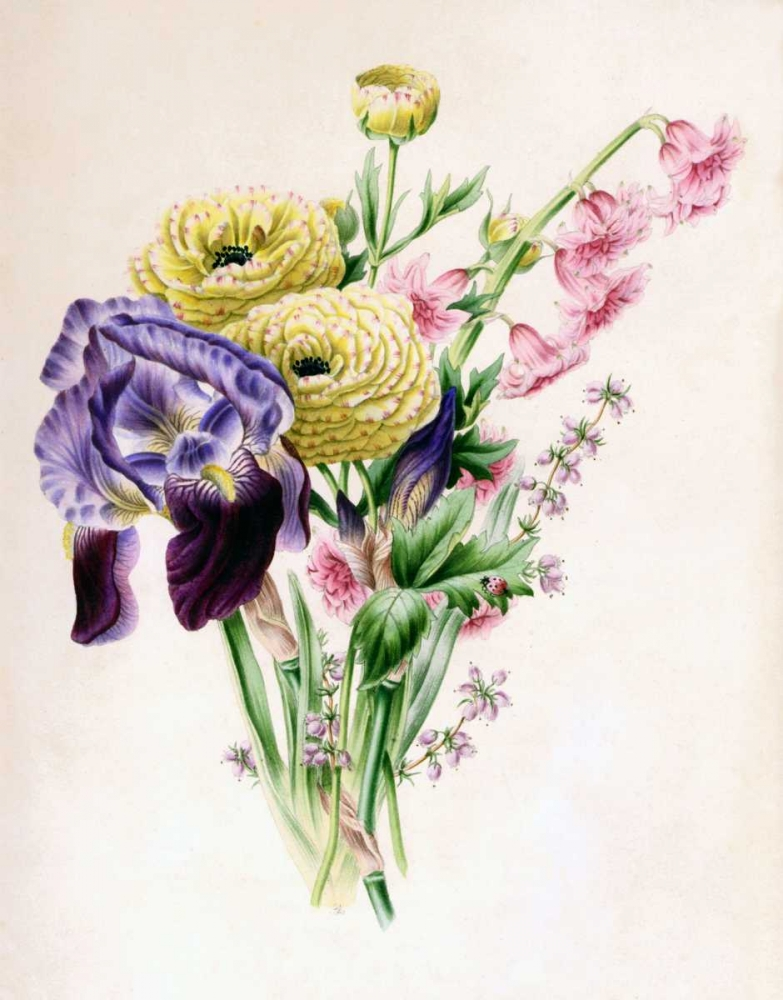 Iris poster print by James Andrews