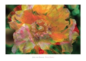 Flower Painter poster print by John Von Benzon