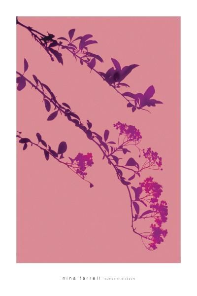 Butterfly Blossoms poster print by Nina Farrell