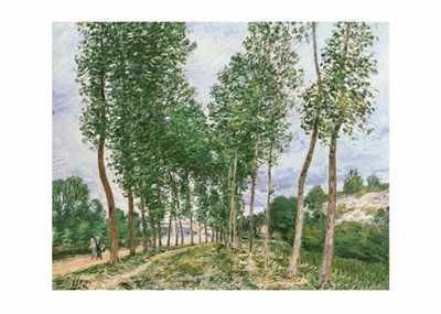 Peupliers Au Bord Du Loing poster print by Alfred Sisley