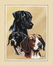 Dog Collage II poster print by Gary Ampel