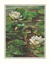 Frog In Lily Pond poster print by Pat Durgin
