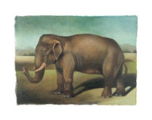 Elephant poster print by Denise Crawford